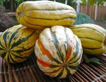 autumn spiced squash sautee